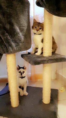 Kit Kat et Vénus